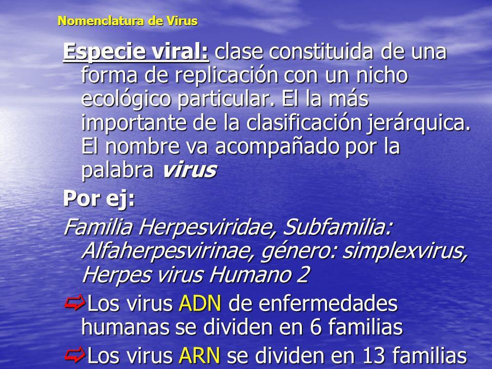 Los virus ADN de enfermedades humanas se dividen en 6 familias