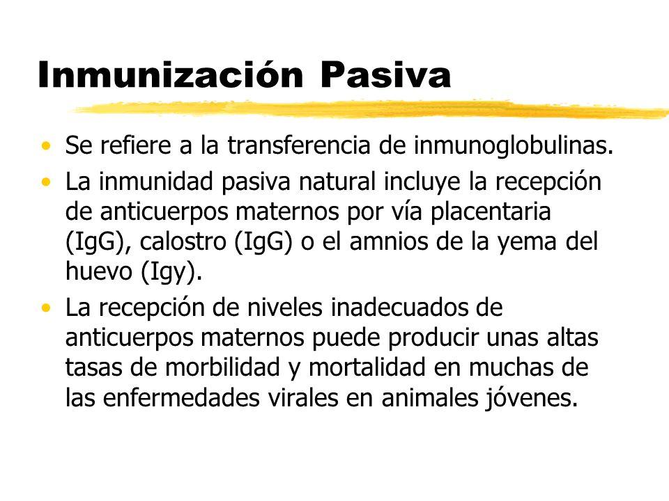 Inmunización Pasiva Se refiere a la transferencia de inmunoglobulinas.