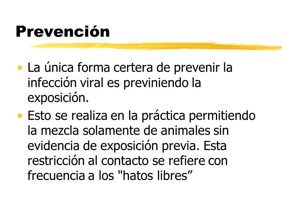 Prevención La única forma certera de prevenir la infección viral es previniendo la exposición.