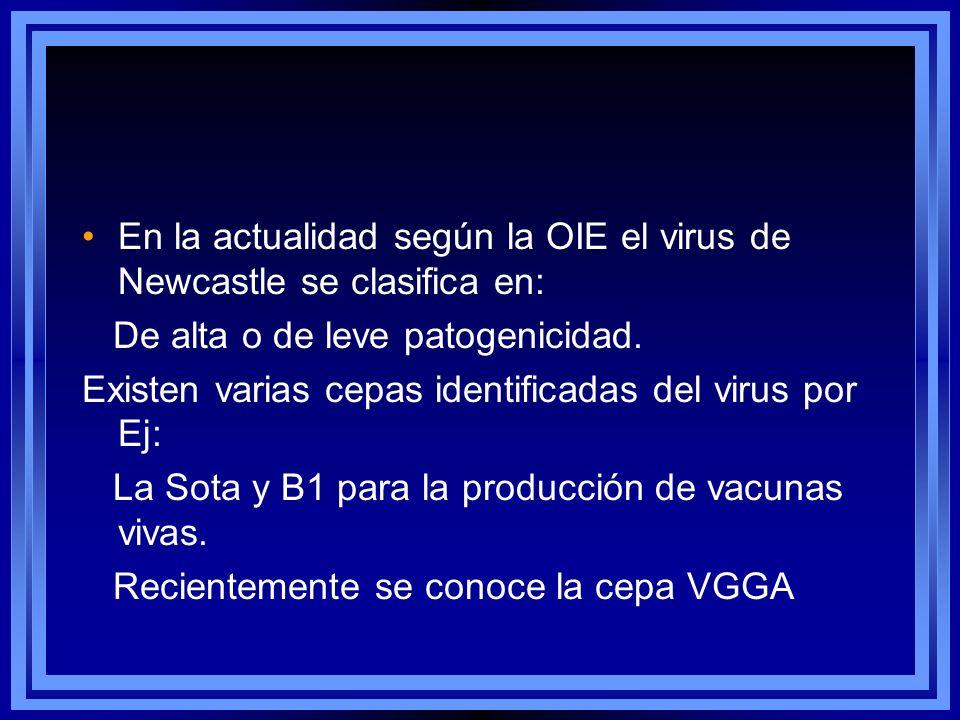En la actualidad según la OIE el virus de Newcastle se clasifica en: