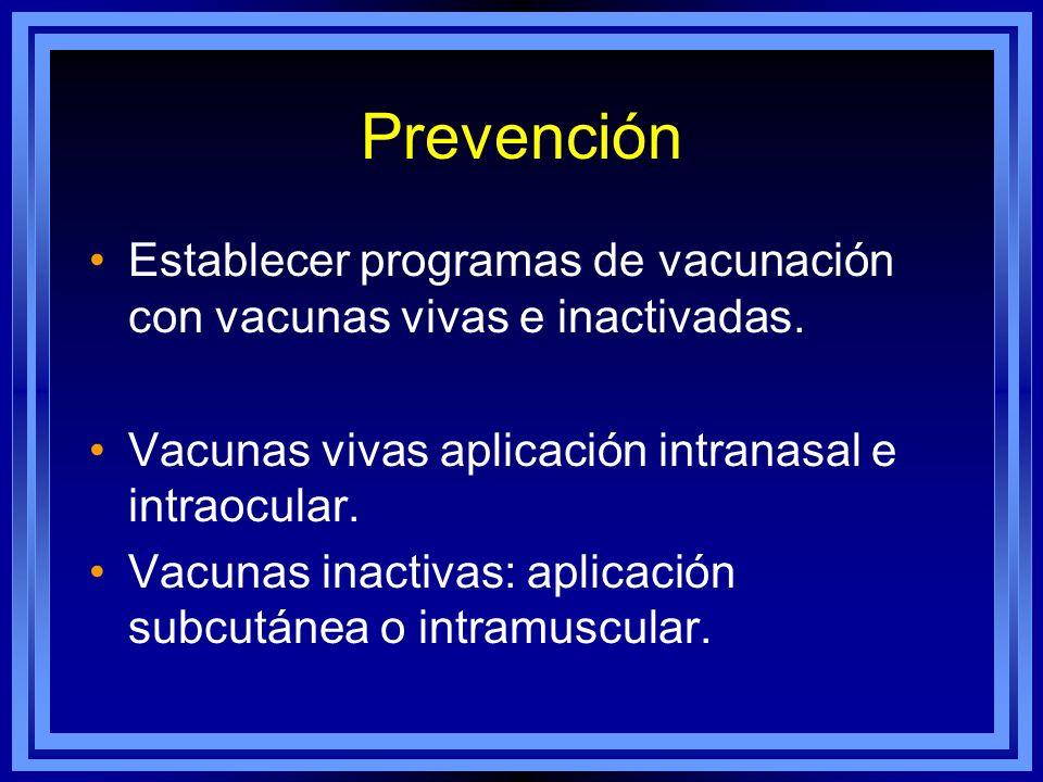Prevención Establecer programas de vacunación con vacunas vivas e inactivadas. Vacunas vivas aplicación intranasal e intraocular.