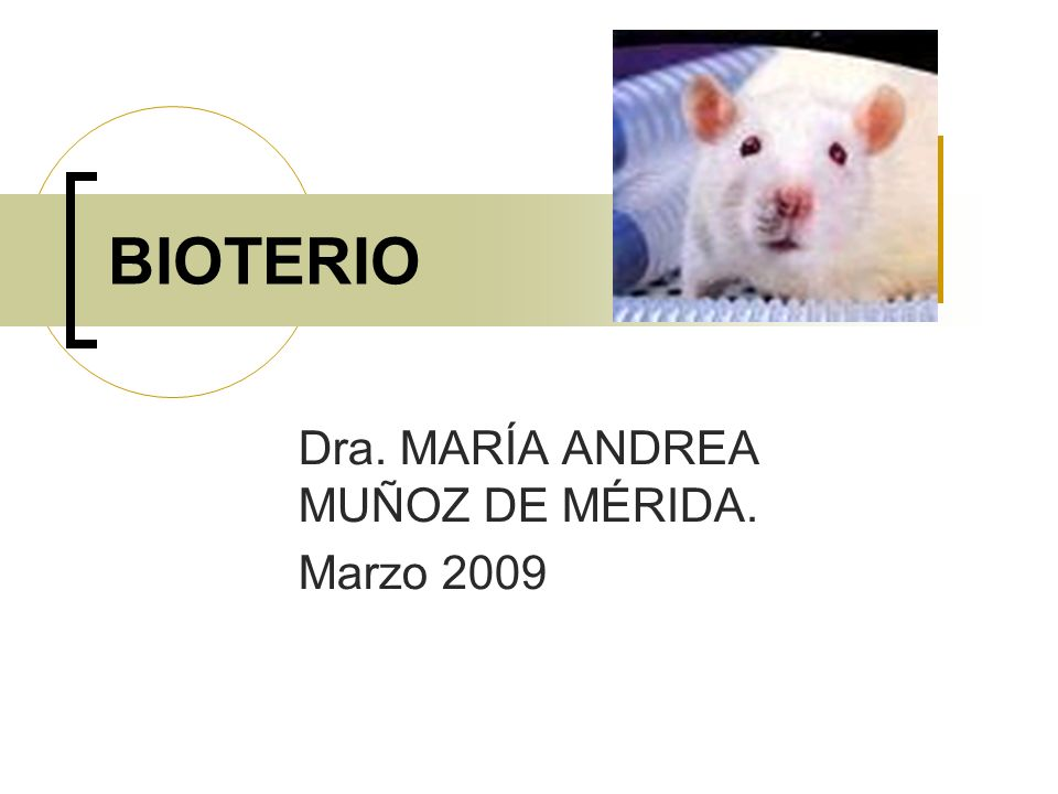 Dra. MARÍA ANDREA MUÑOZ DE MÉRIDA. Marzo 2009