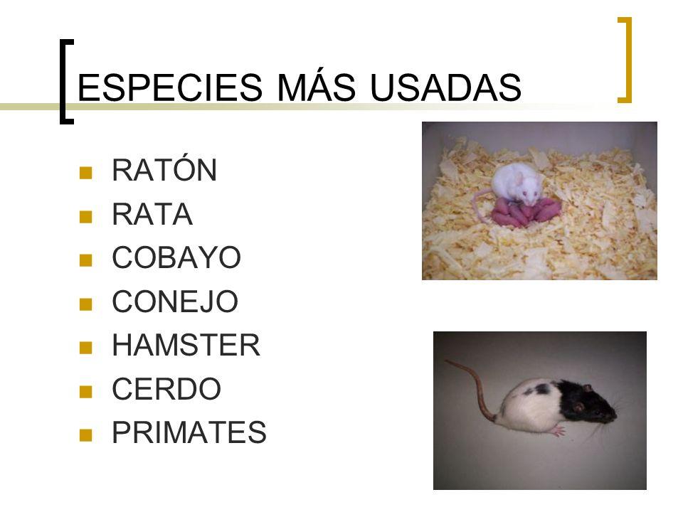 ESPECIES MÁS USADAS RATÓN RATA COBAYO CONEJO HAMSTER CERDO PRIMATES