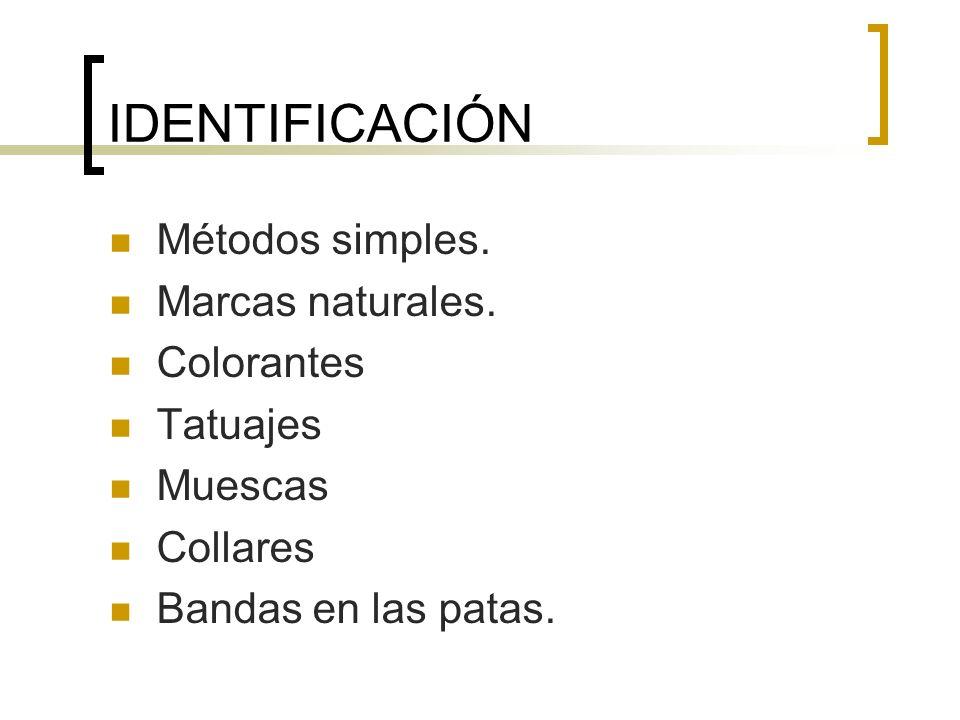 IDENTIFICACIÓN Métodos simples. Marcas naturales. Colorantes Tatuajes