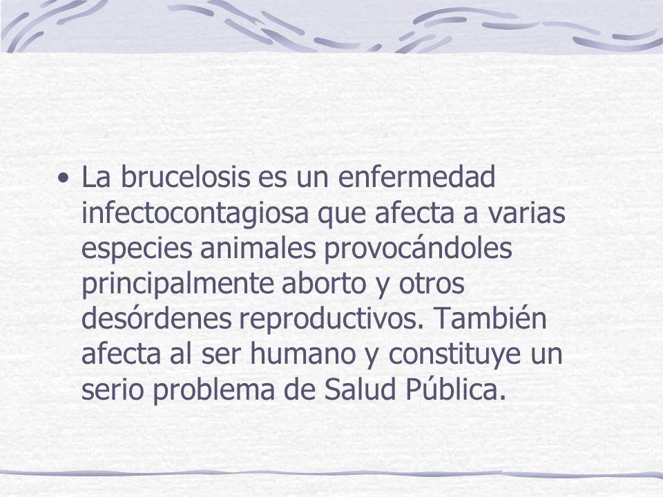 La brucelosis es un enfermedad infectocontagiosa que afecta a varias especies animales provocándoles principalmente aborto y otros desórdenes reproductivos.