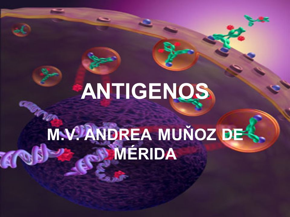 M.V. ANDREA MUŇOZ DE MÉRIDA