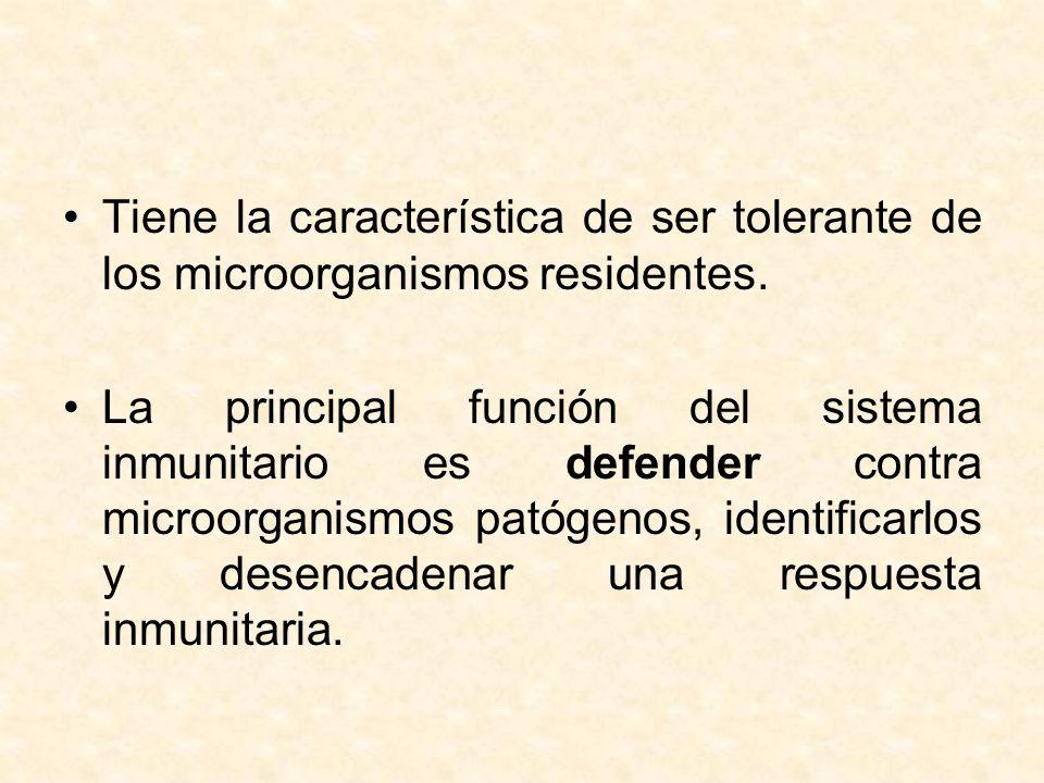Tiene la característica de ser tolerante de los microorganismos residentes.