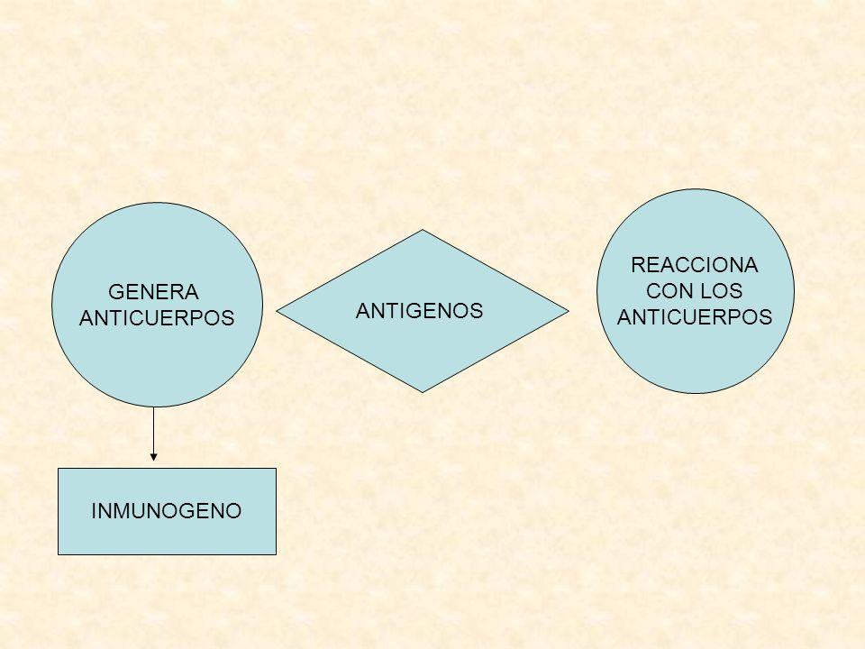 REACCIONA CON LOS ANTICUERPOS GENERA ANTICUERPOS ANTIGENOS INMUNOGENO