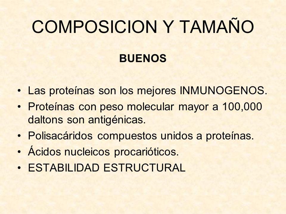 COMPOSICION Y TAMAÑO BUENOS Las proteínas son los mejores INMUNOGENOS.