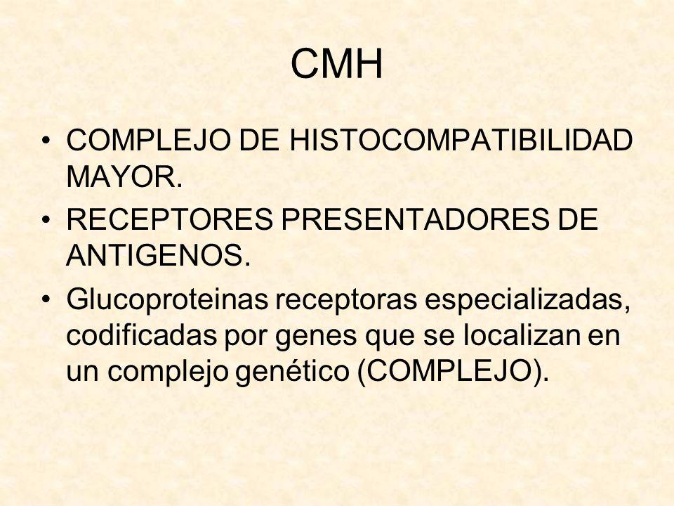 CMH COMPLEJO DE HISTOCOMPATIBILIDAD MAYOR.