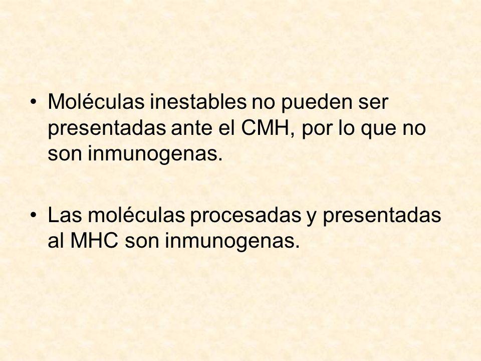 Moléculas inestables no pueden ser presentadas ante el CMH, por lo que no son inmunogenas.