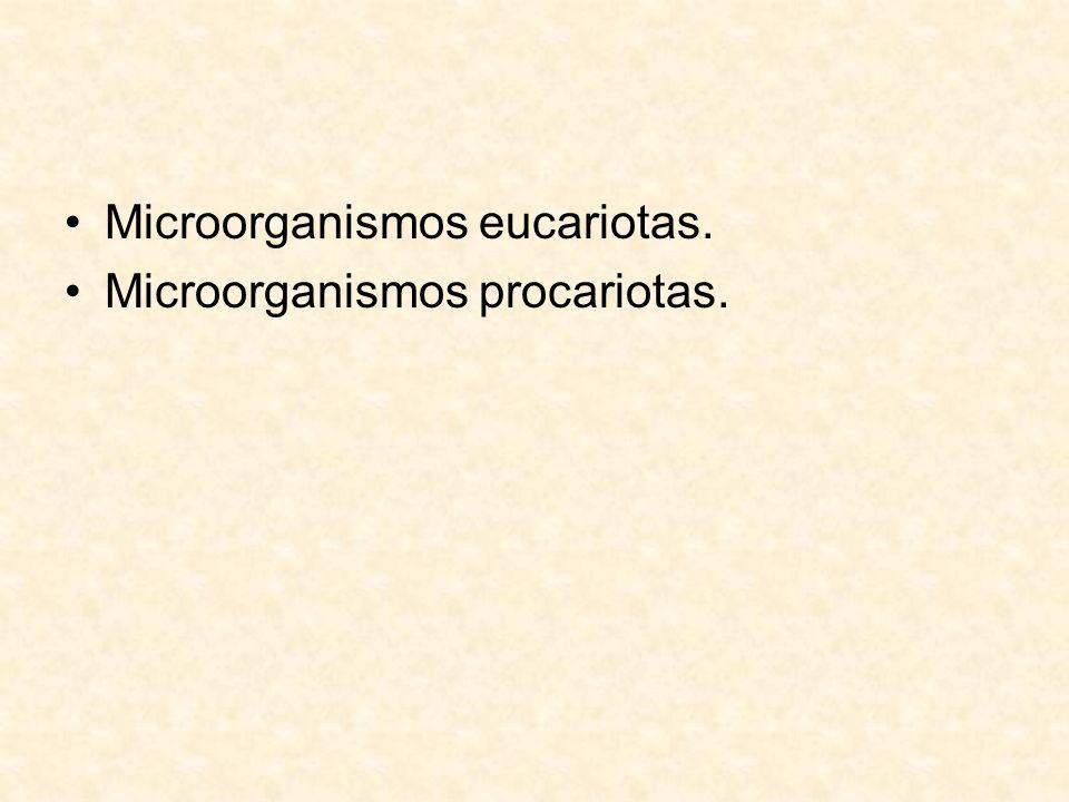 Microorganismos eucariotas.
