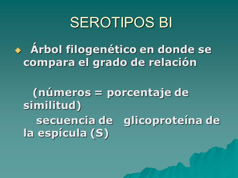 SEROTIPOS BI Árbol filogenético en donde se compara el grado de relación. (números = porcentaje de similitud)