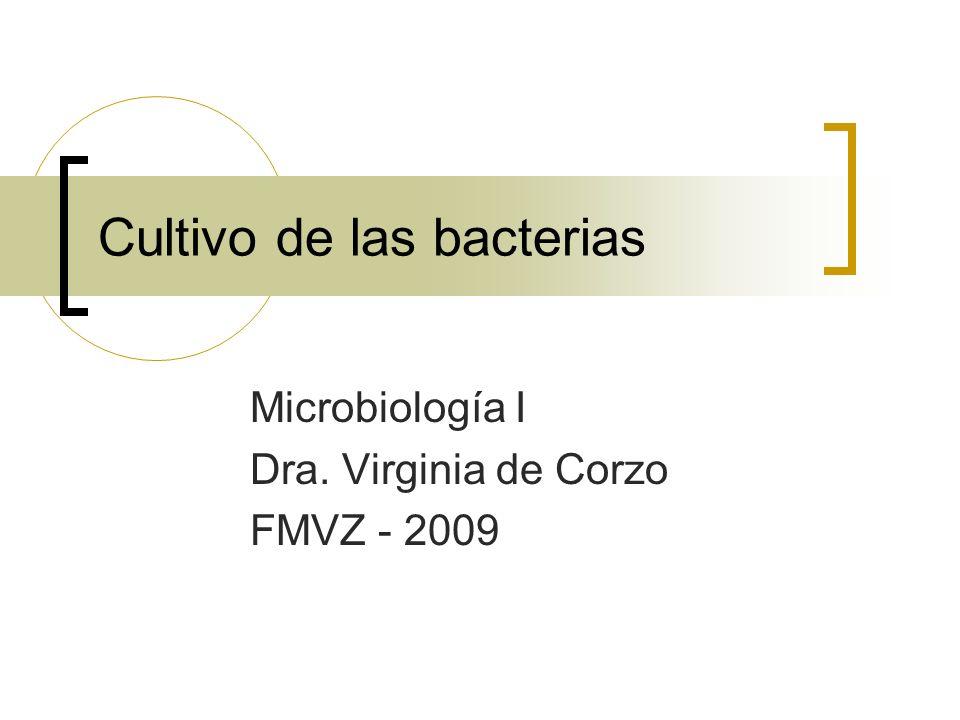 Cultivo de las bacterias