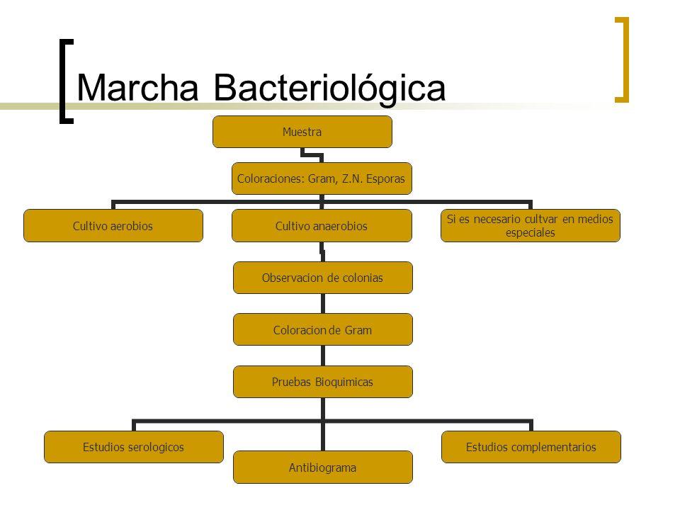 Marcha Bacteriológica