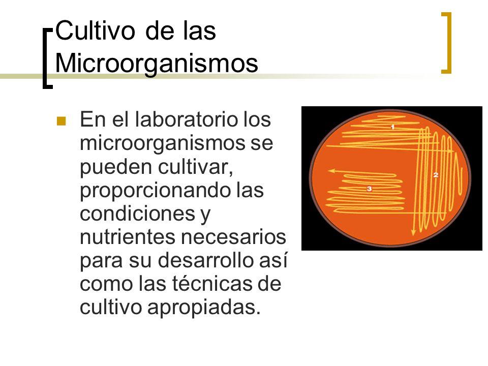 Cultivo de las Microorganismos
