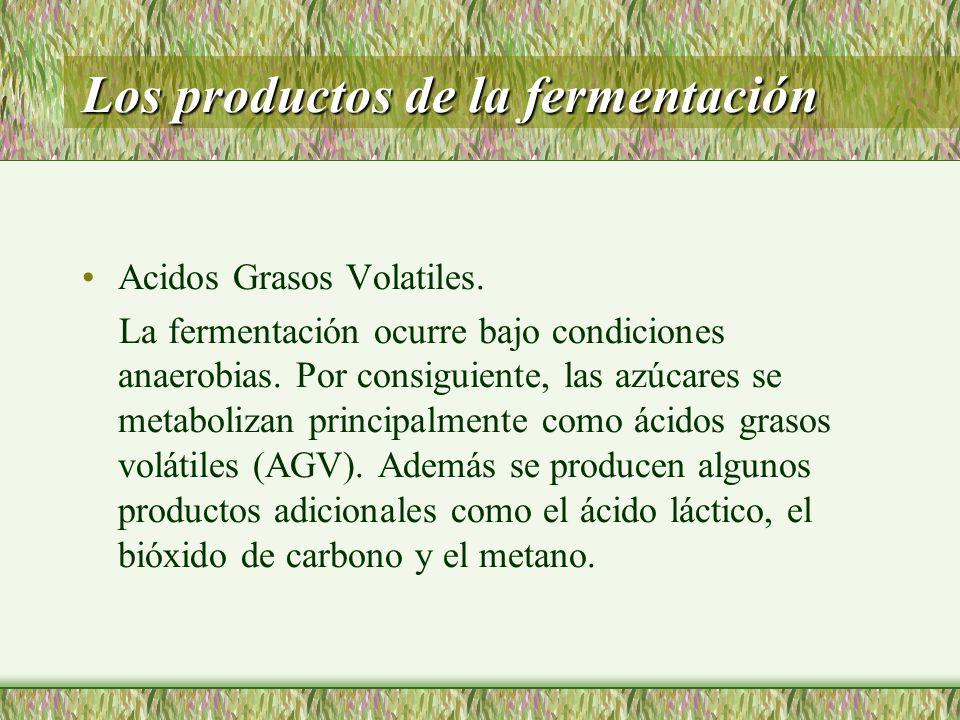 Los productos de la fermentación