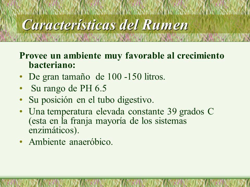 Características del Rumen