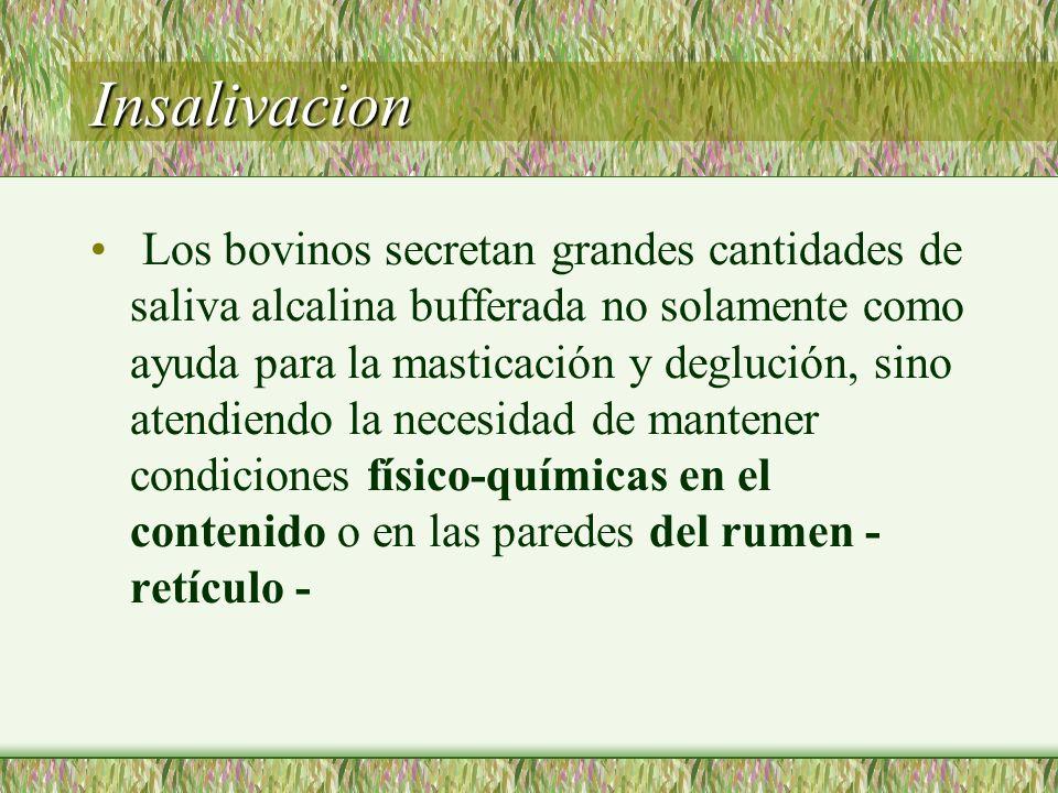 Insalivacion