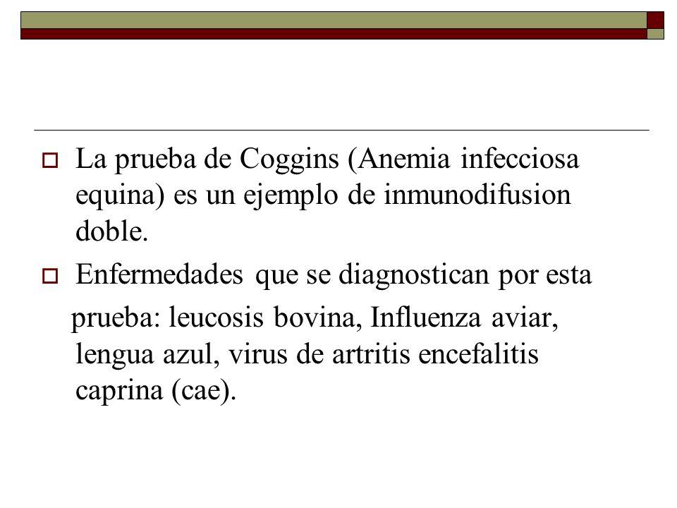La prueba de Coggins (Anemia infecciosa equina) es un ejemplo de inmunodifusion doble.