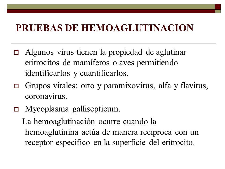 PRUEBAS DE HEMOAGLUTINACION