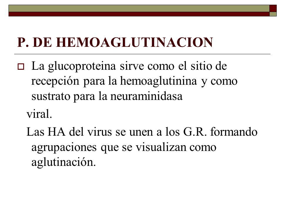 P. DE HEMOAGLUTINACION La glucoproteina sirve como el sitio de recepción para la hemoaglutinina y como sustrato para la neuraminidasa.