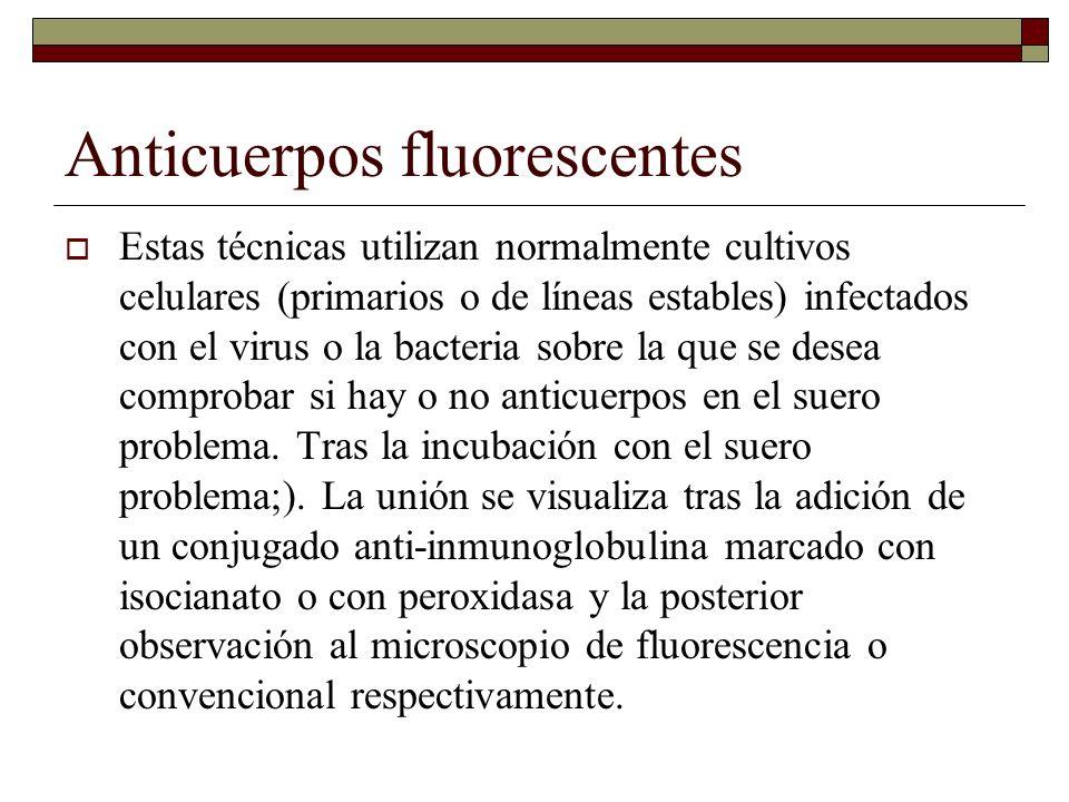 Anticuerpos fluorescentes