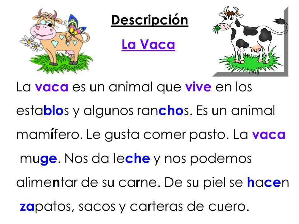 Descripción La Vaca. La vaca es un animal que vive en los. establos y algunos ranchos. Es un animal.