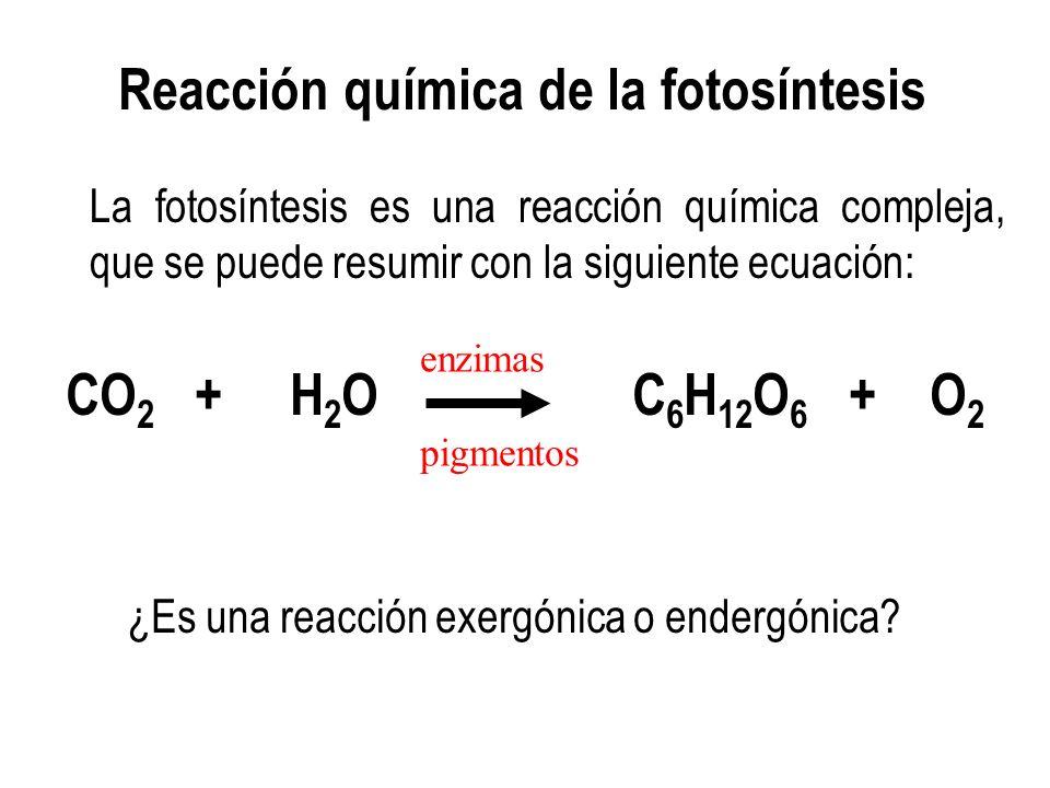 Fotosintesis y su ecuacion 36