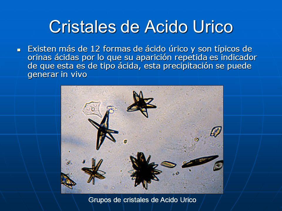 productos omnilife para el acido urico alimentos para quitar el acido urico alimentos con alto contenido acido urico