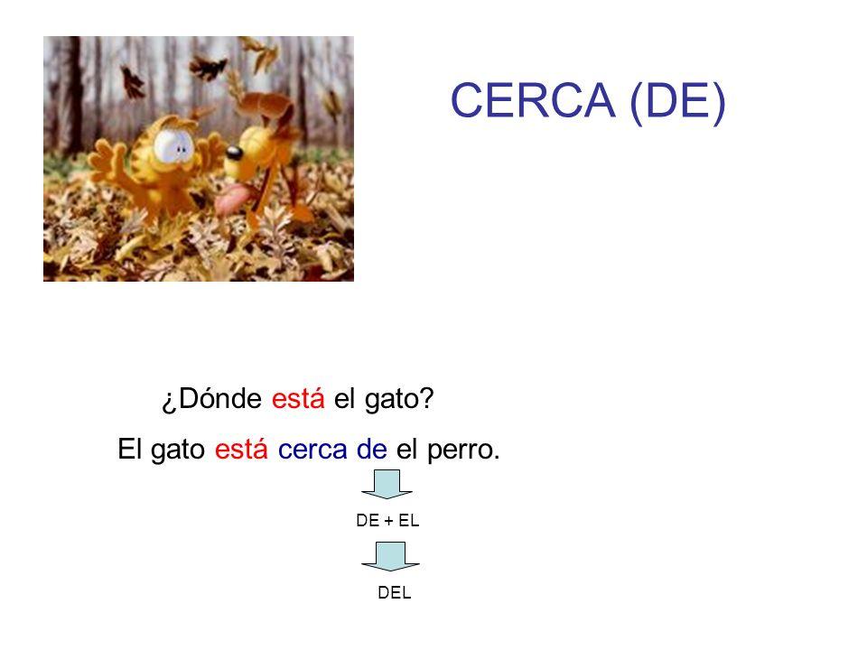 CERCA (DE) ¿Dónde está el gato El gato está cerca de el perro.