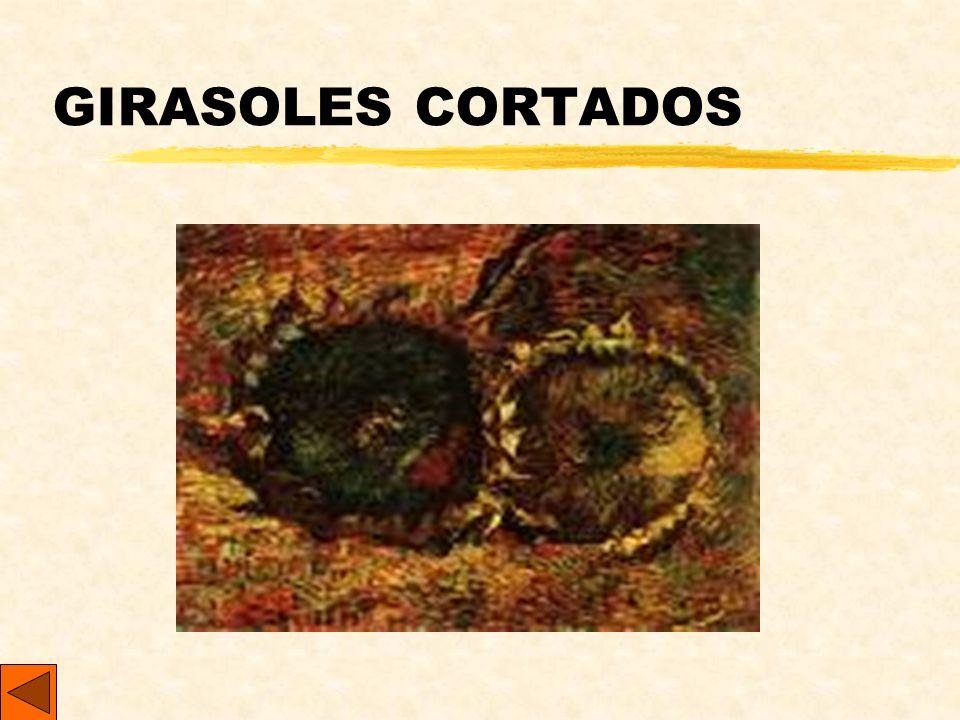 GIRASOLES CORTADOS