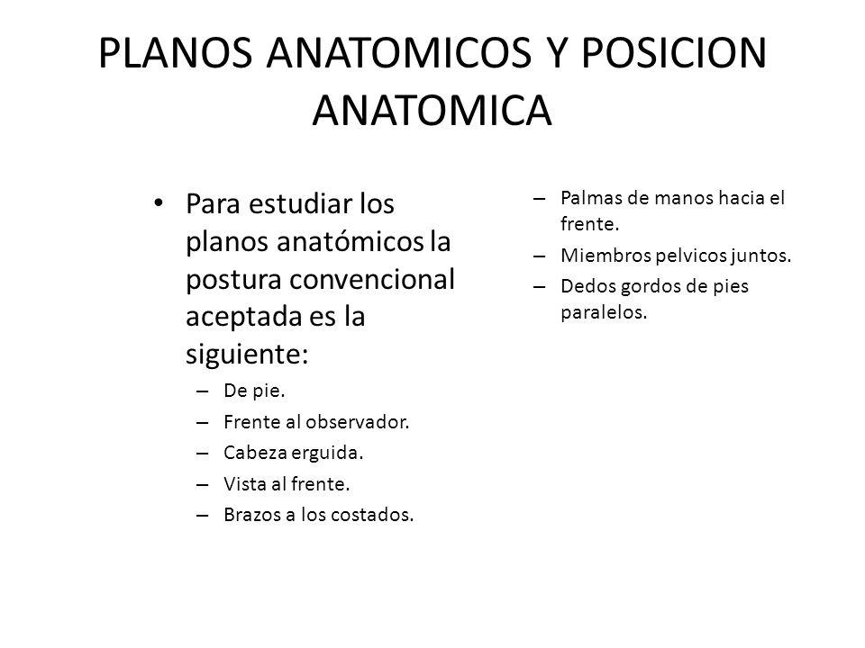 PLANOS ANATOMICOS Y POSICION ANATOMICA