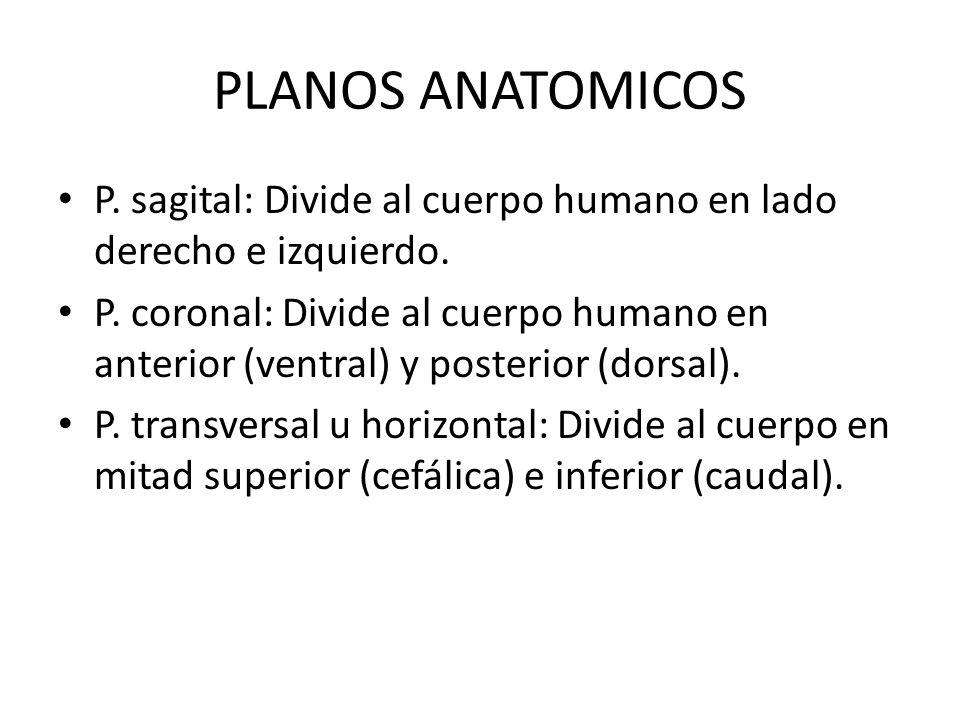 PLANOS ANATOMICOS P. sagital: Divide al cuerpo humano en lado derecho e izquierdo.