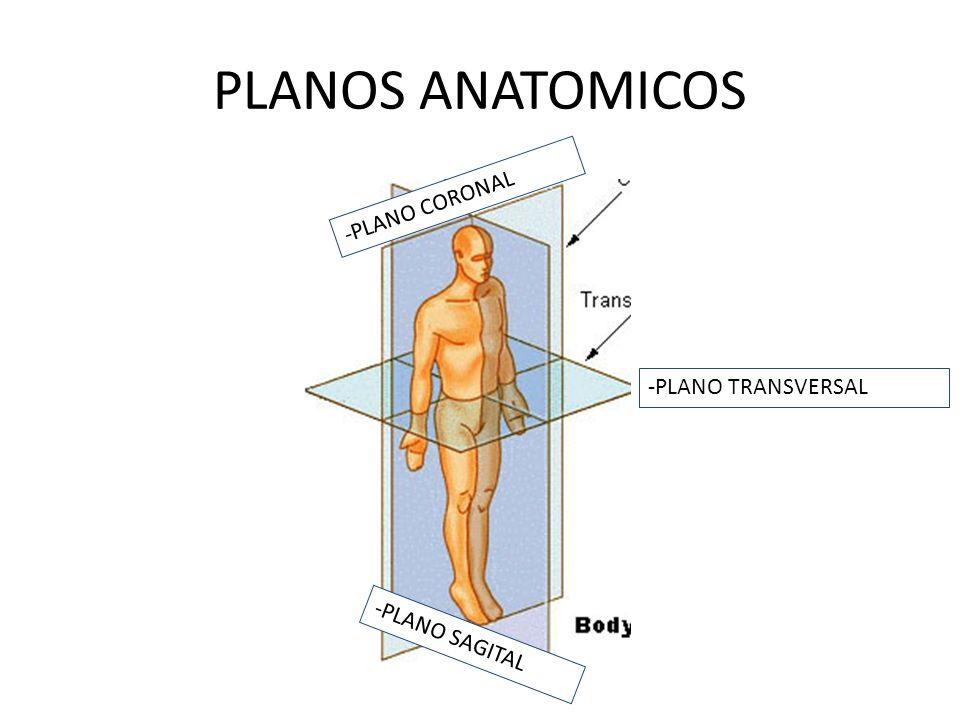 PLANOS ANATOMICOS -PLANO CORONAL -PLANO TRANSVERSAL -PLANO SAGITAL