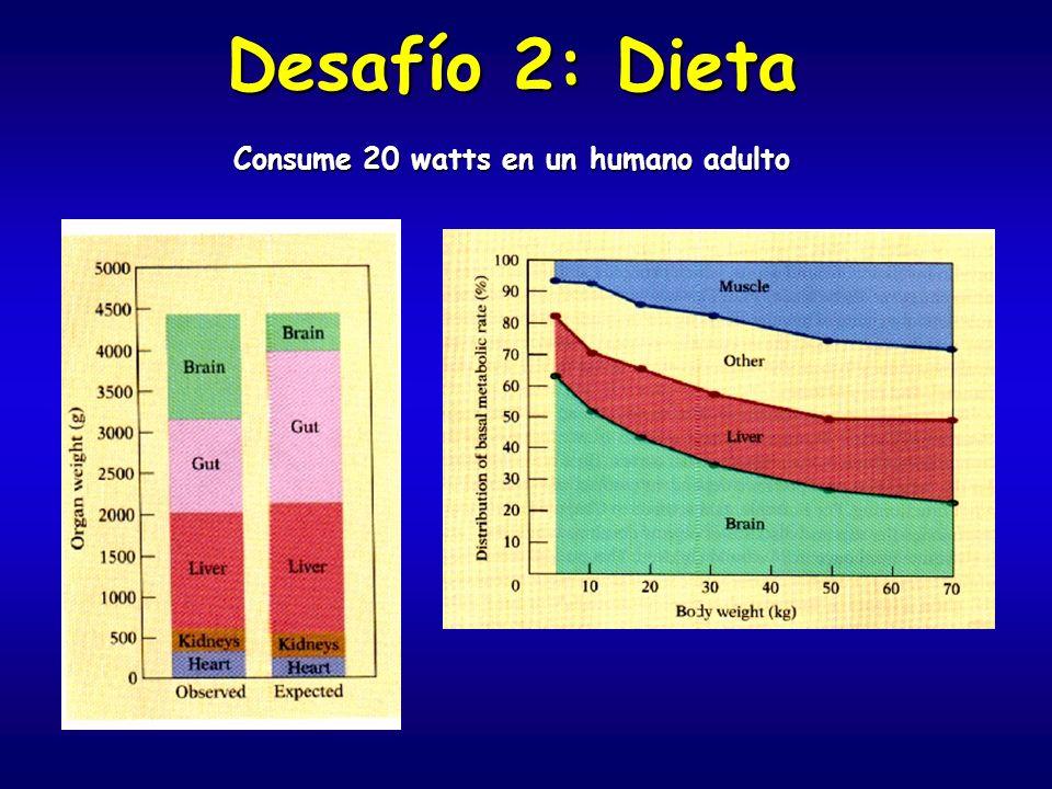 Desafío 2: Dieta Consume 20 watts en un humano adulto
