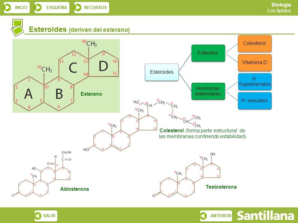 esteroides como funcionan