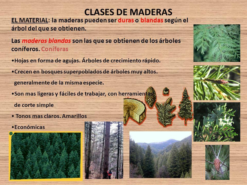 La madera ppt video online descargar for Arboles de hoja perenne que crece rapido