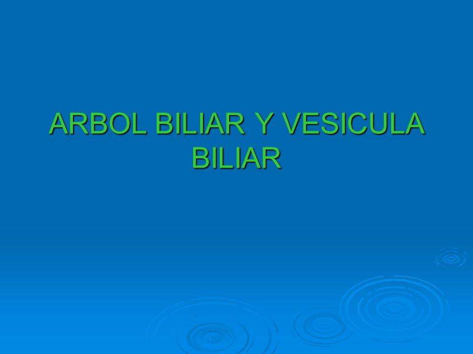 ARBOL BILIAR Y VESICULA BILIAR