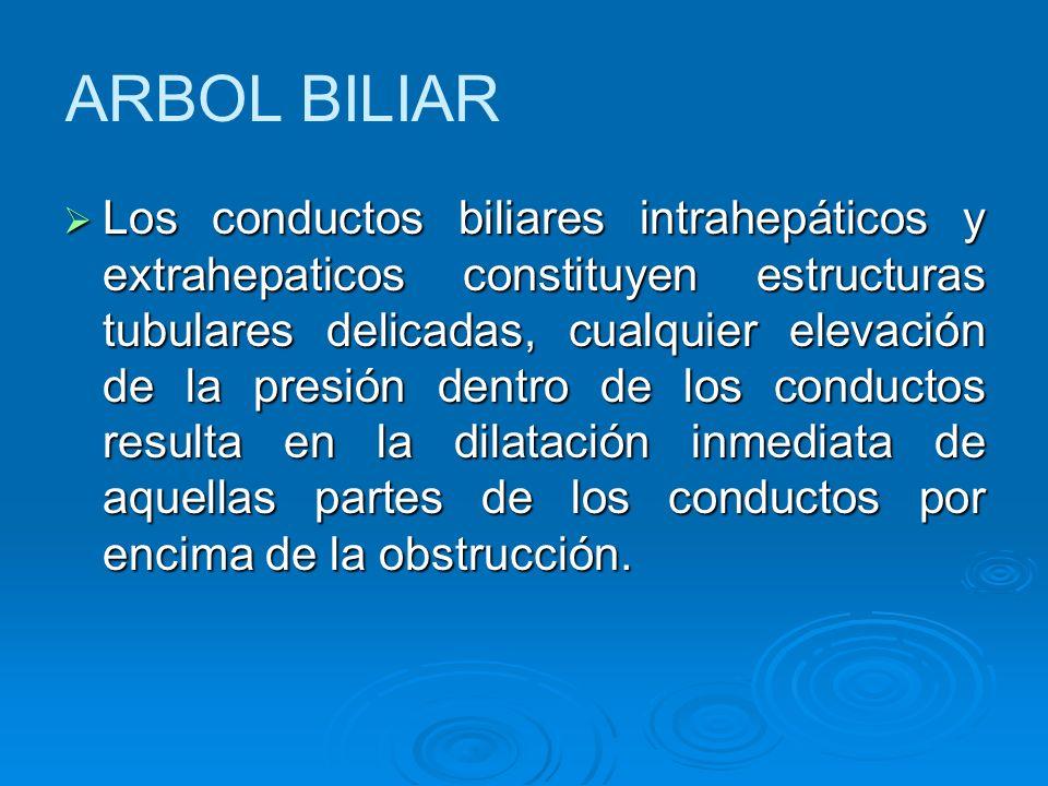 ARBOL BILIAR