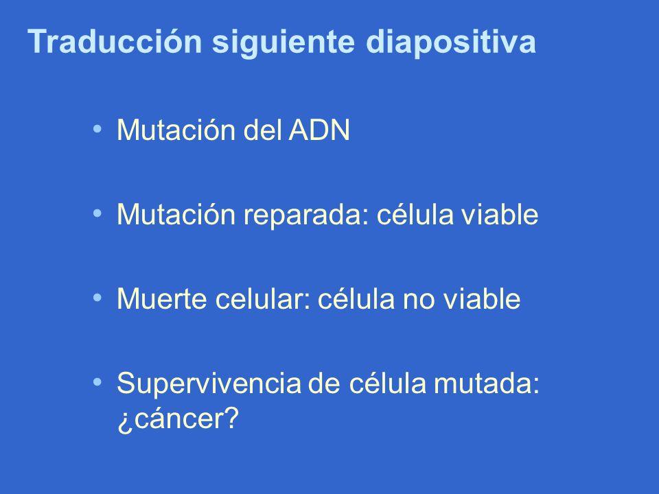 Traducción siguiente diapositiva