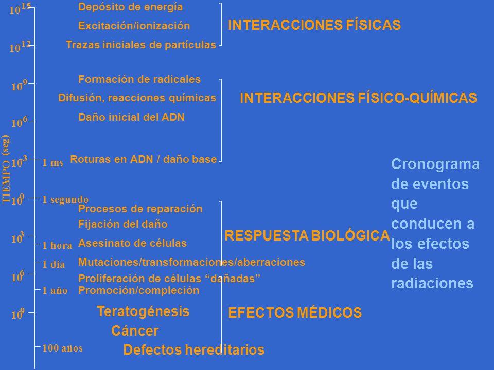 Cronograma de eventos que conducen a los efectos de las radiaciones