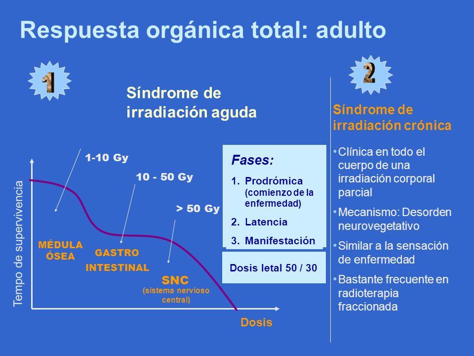 (sistema nervioso central)