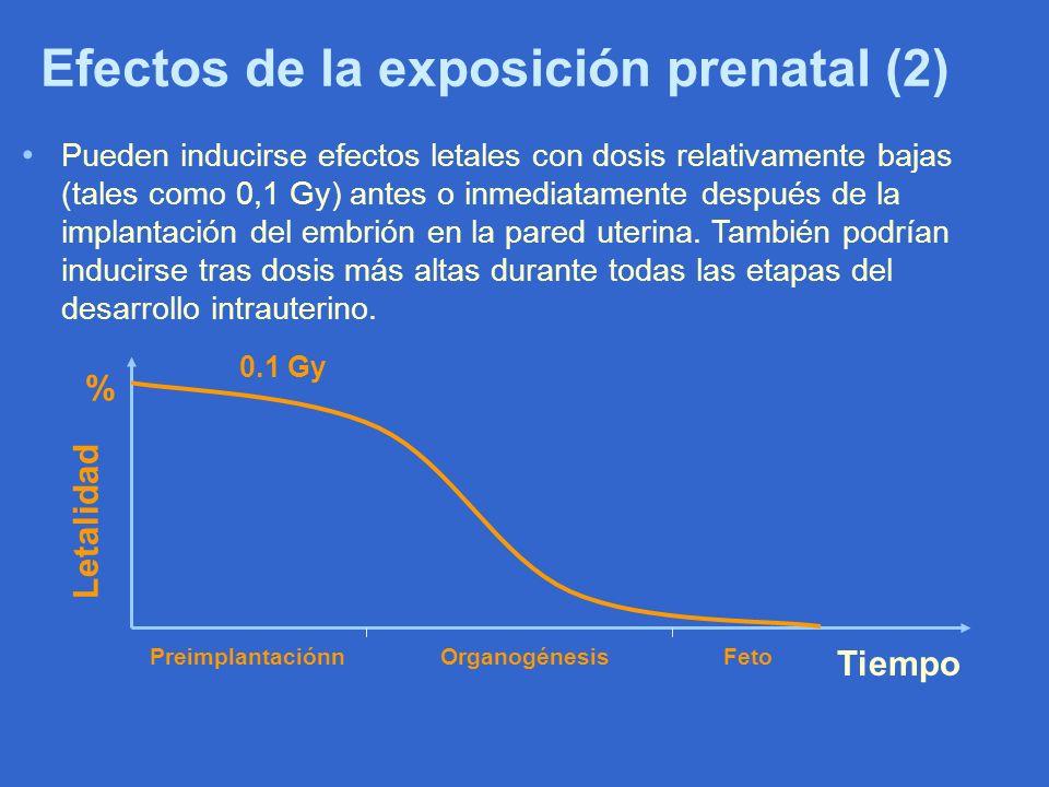 Efectos de la exposición prenatal (2)