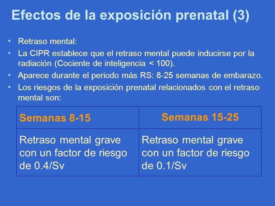 Efectos de la exposición prenatal (3)