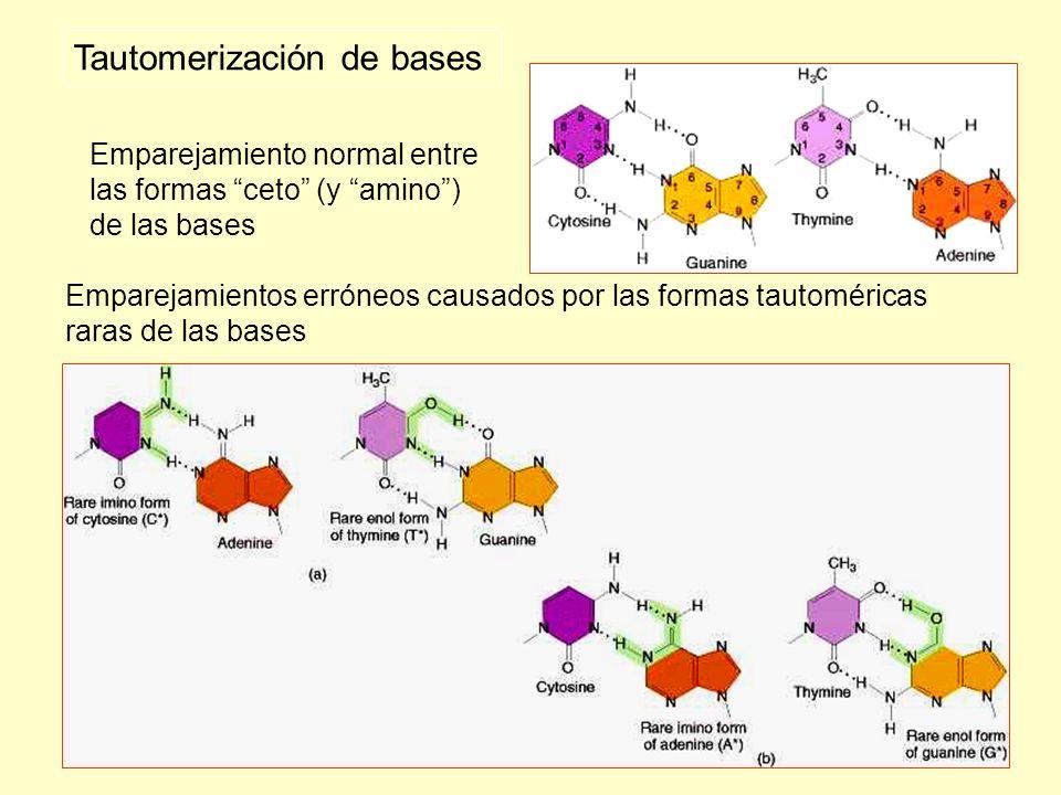 Tautomerización de bases