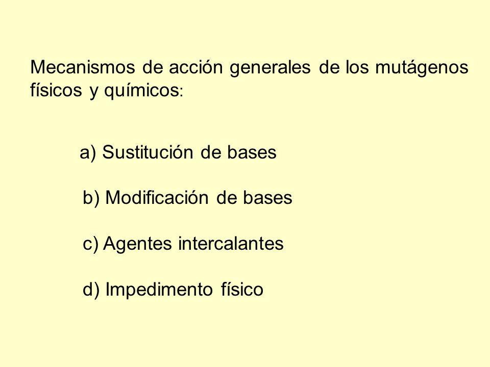 Mecanismos de acción generales de los mutágenos físicos y químicos: