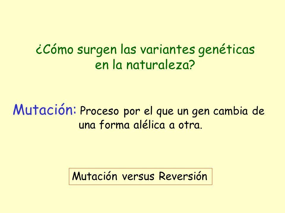 ¿Cómo surgen las variantes genéticas