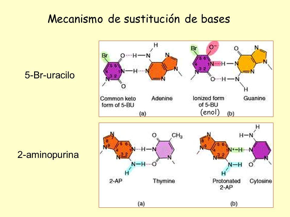 Mecanismo de sustitución de bases