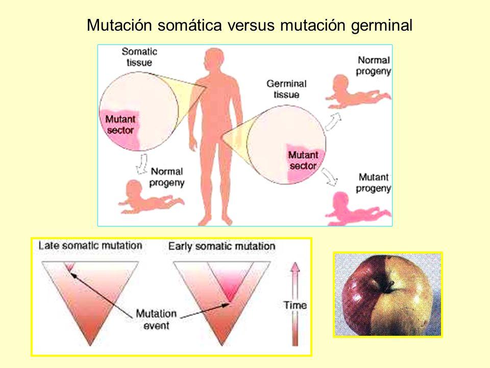 Mutación somática versus mutación germinal